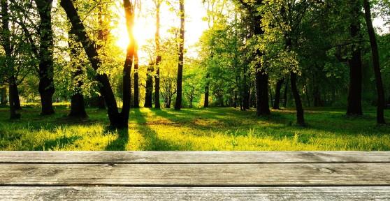 drevena-terasa